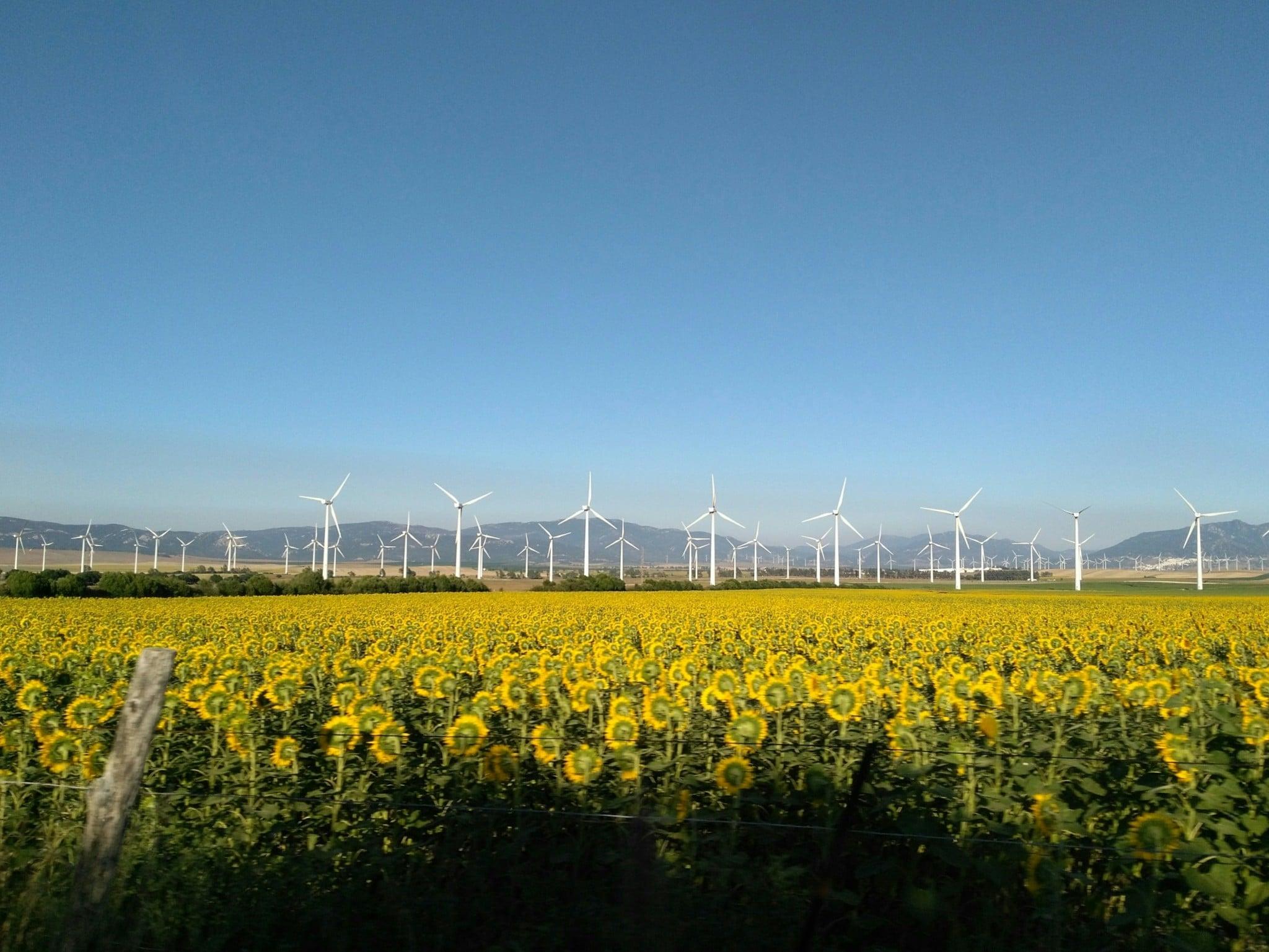 johanna montoya 483038 unsplash 1 Moixa | Home Energy Storage | Smart Energy Management